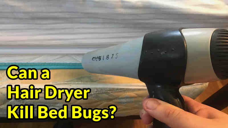 Can a Hair Dryer Kill Bed Bugs